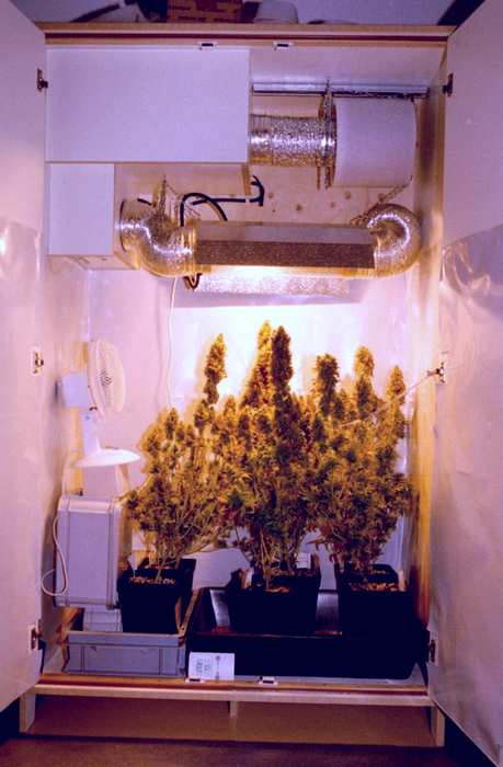 Odor controll in your grow room